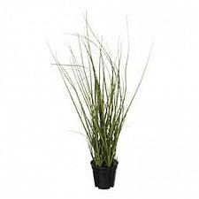 Растение в горшке (37 см) Трава 58005400