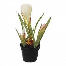 Растение в горшке Home-Religion (21 см) Крокус 58021500