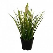 Растение в горшке Home-Religion (28 см) Лаванда 58021700