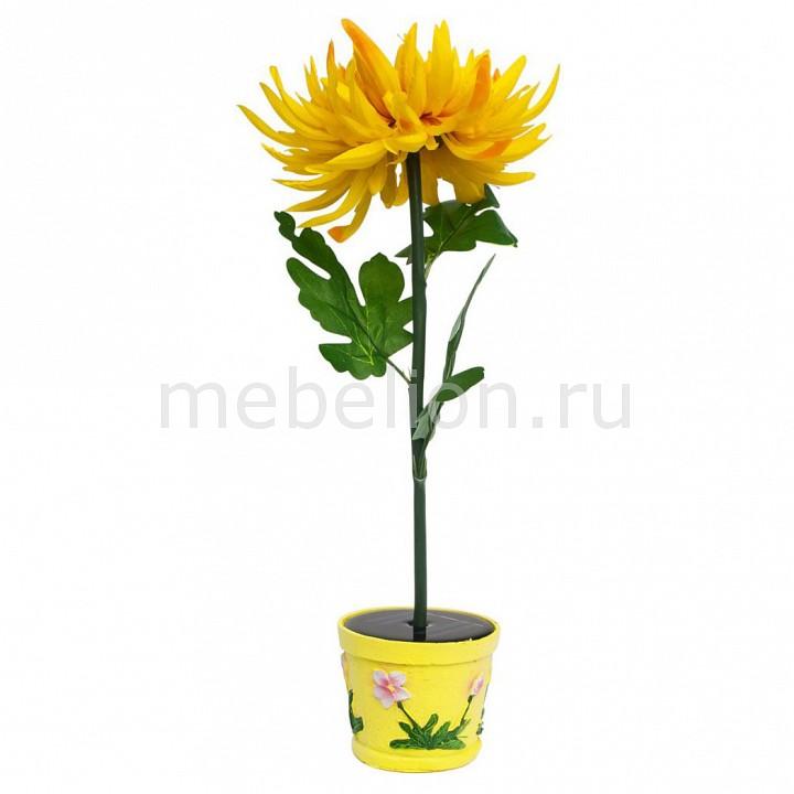 Хризантема в горшке PL309 06269