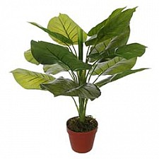 Растение в горшке Home-Religion (63 см) Потос 58008600