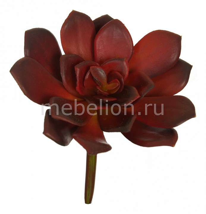 Цветок (14 см) Суккулент 58007200