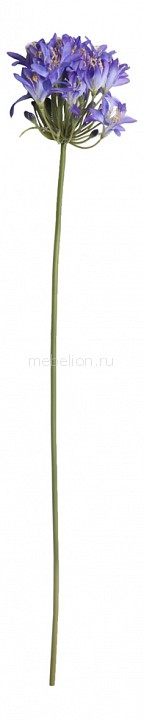 Цветок (80 см) Агапантус 24001900