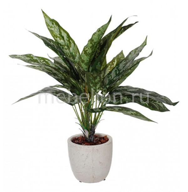 Растение в горшке Home-Religion
