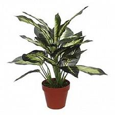 Растение в горшке Home-Religion (43 см) Диффенбахия 58008300
