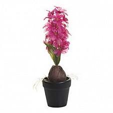 Растение в горшке Garda Decor (35 см) Гиацинт с луковицей 8J-10LK0036