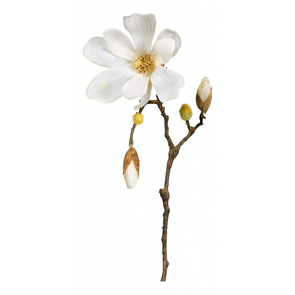 Цветок Home-Philosophy