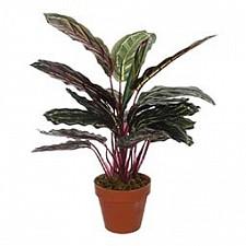 Растение в горшке Home-Religion (43 см) 58008400