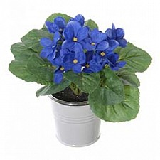 Растение в горшке Home-Religion (18 см) Фиалка декоративная 56000700