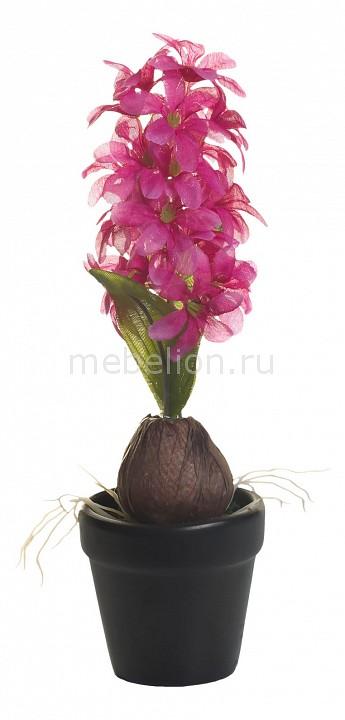 Растение в горшке (35 см) Гиацинт с луковицей 8J-10LK0036