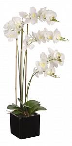 Растение в горшке (80 см) Белая орхидея YW-36