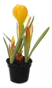 Растение в горшке (21 см) Крокус 58021600