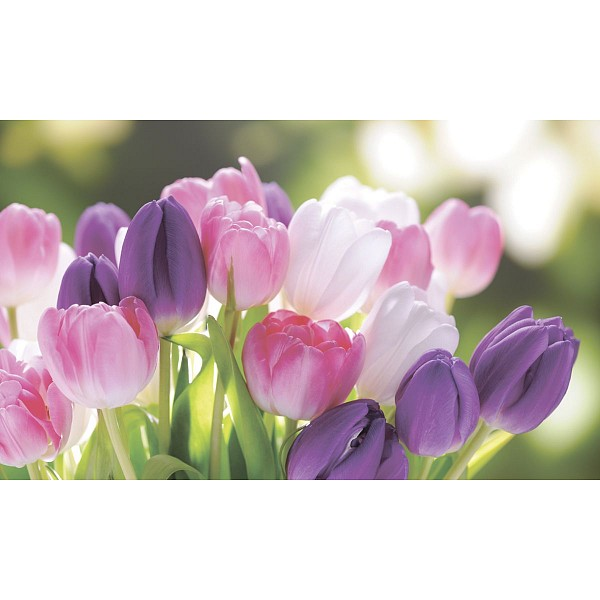 Картина (50х30 см) Букет тюльпанов SE-102-227 фото