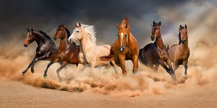 Картина (120х60 см) Кони скачут HE-102-150