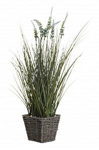 Растения в горшке (55 см) Вейник остроконечный 8J-11AK0023