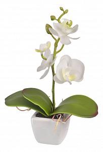 Растение в горшке (18 см) Белая орхидея YW-33