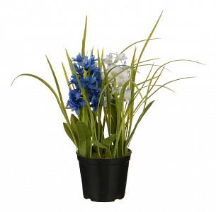 Растение в горшке (32 см) Гиацинт 654-191