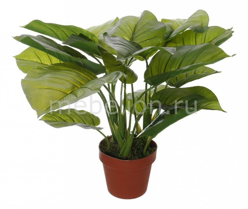 Растение в горшке Home-Religion (50 см) Потос 58008500 растение в горшке home religion 37 см трава 58005400