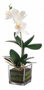 Растение в горшке (36 см) Белая орхидея YW-38