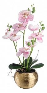 Растение в горшке (36 см) Нежная орхидея YW-41