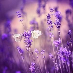 Картина (40х40 см) Белые бабочки HE-101-932