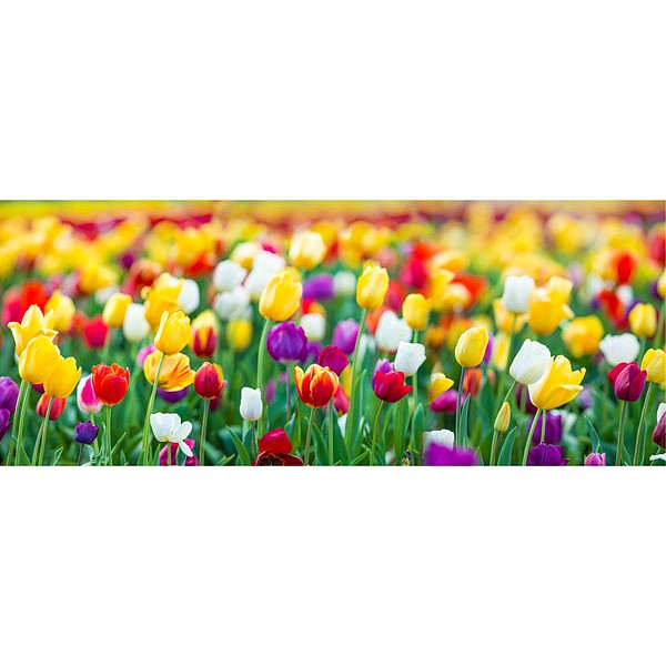 Картина (50х20 см) Поле тюльпанов HE-101-538 фото