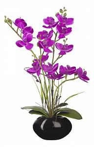 Растение в горшке (34 см) Орхидея в кашпо YW-SUH28