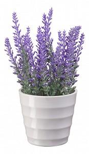 Растение в горшке (18 см) Вереск в кашпо B14-purple