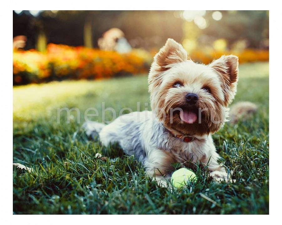 Панно Ekoramka (50х40 см) Собака 1728074К5040 цены