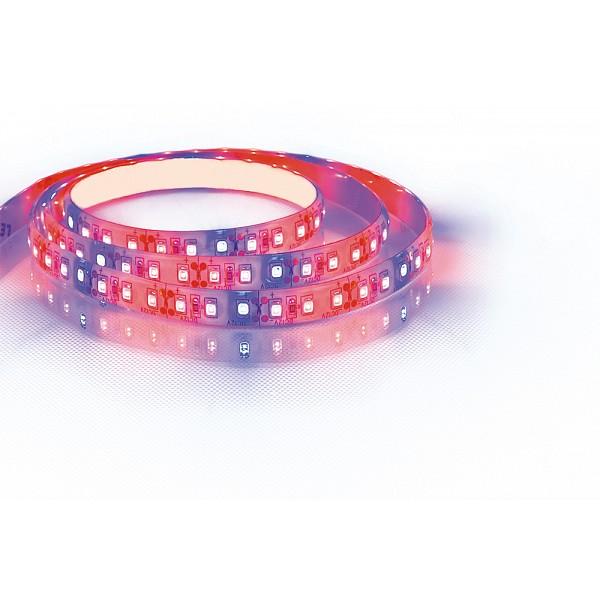 Шнур световой [5 м] LS670 29518