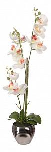 Растение в горшке (62 см) Орхидея в вазе YW-SUH27