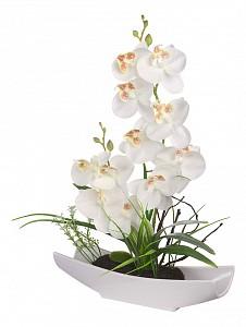 Растение в горшке (32 см) Орхидея в ладье YW-32