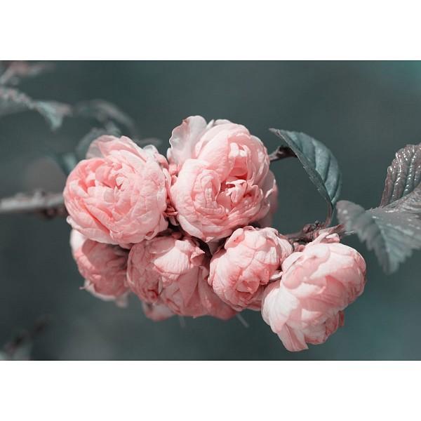 Картина (70х50 см) Бутоны розовых цветков на ветке HE-101-859 фото