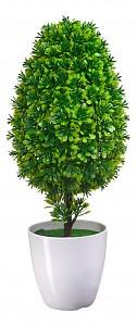 Растение в горшке (40 см) Мирт в кашпо B19