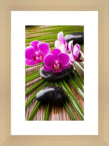 Картина (30х40 см) Цветки орхидеи BE-103-209