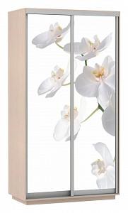Шкаф-купе Экспресс Хит Фото Орхидея