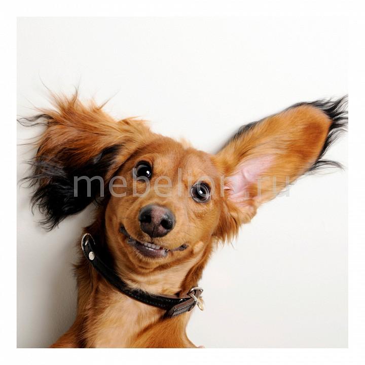 Панно Ekoramka (30х30 см) Собака 1728005К3030 картина птичка 30х30 см