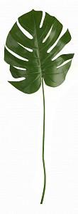 Зелень (104 см) Лист монстеры 58001700