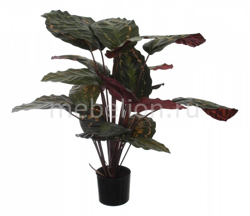 Растение в горшке Home-Religion (60 см) Калатея розеопикта 58008700 растение в горшке home religion 37 см трава 58005400