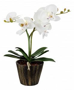 Растения в горшке FlowerPower 28002