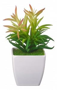 Растение в горшке (19 см) Эрика в кашпо B20