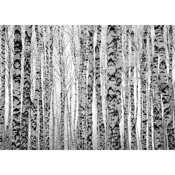 Картина (70х50 см) Березовая роща HE-101-844 фото
