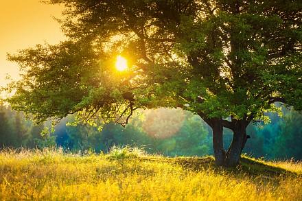 Картина (60х40 см) Дерево в лучах солнца HE-101-824