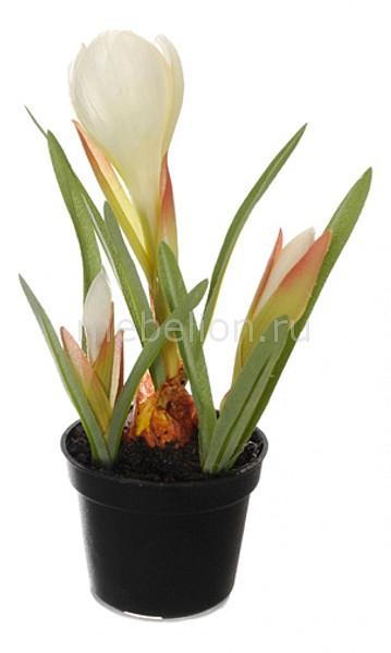 Растение в горшке Home-Religion (21 см) Крокус 58021500 растение в горшке home religion 37 см трава 58005400