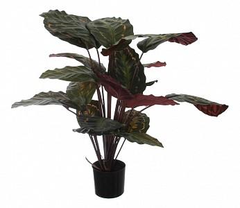 Растение в горшке (60 см) Калатея розеопикта 58008700