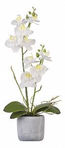 Растение в горшке (36 см) Орхидея в кашпо YW-SUH29