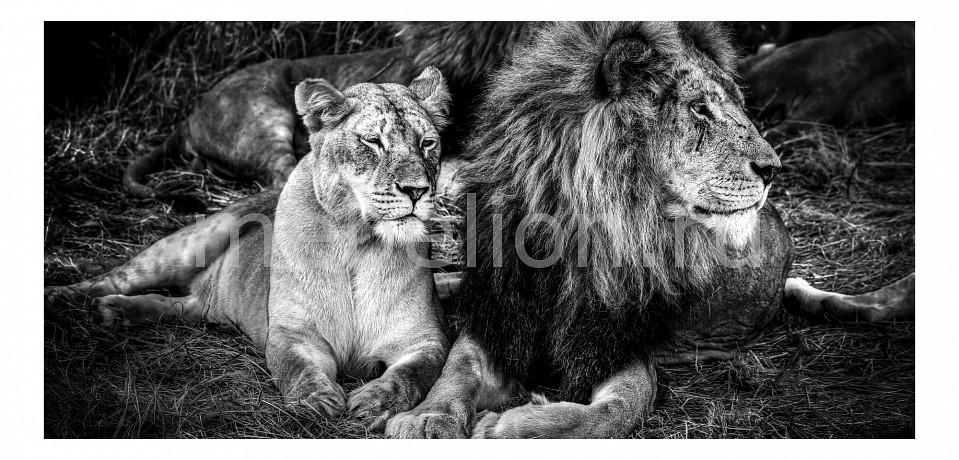 Панно Ekoramka (1250х60 см) Львы 1729003К60125 рубель птицы львы 02