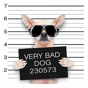 Панно (40х40 см) Собака 1715073К4040