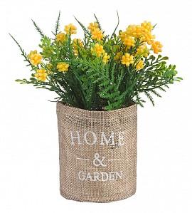 Растение в горшке (17 см) Кипарис в мешочке B40-yellow