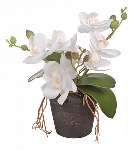 Растение в горшке (18 см) Белая орхидея YW-29
